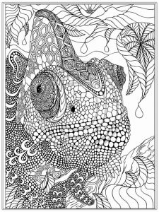 Animal Coloring Pages for Kids - Best Printable Animal Coloring Pages New Printable Animal Coloring Pages 10r