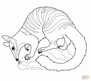 Australian Animals Coloring Pages - Aboriginal Coloring Pages Fresh Australian Animals Coloring Pages Elegant top 79 Australia Coloring 1s