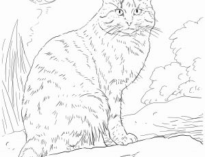Australian Animals Coloring Pages - Wildlife Coloring Books 18d