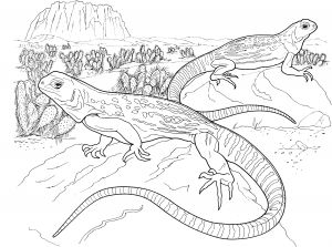 Australian Animals Coloring Pages - Lizard Coloring Pages Lizard Coloring Pages Australian Animals 3e