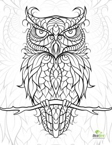 Ben Franklin Coloring Pages - Owl 7t