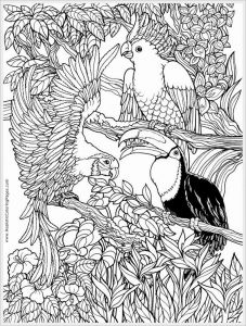 Bird Coloring Pages for Kids - Printable Free Sesame Street Coloring Pages Unique Bird Coloring Pages Free Lovely Adult Coloring Pages Birds Unique 6q