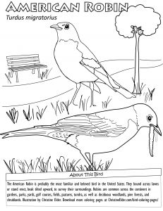Bird Coloring Pages for Kids - Bird Coloring Pages New Bird Coloring Pages for Kids 17s