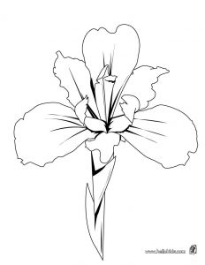 Breast Cancer Coloring Pages - Flower Page Printable Coloring Sheets 19j