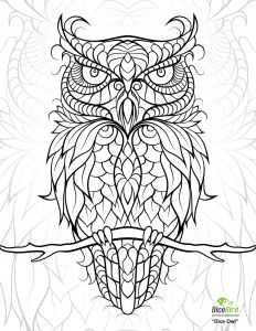 """Colorama Coloring Pages to Print - Icolor """"owls"""" 1582—2048 More Coloring Books Printable Adult Coloring 3c"""