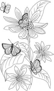 Coloring Pages butterfly - Cool Vases Flower Vase Coloring Page Pages Flowers In A top I 0d Hard butterfly 5a