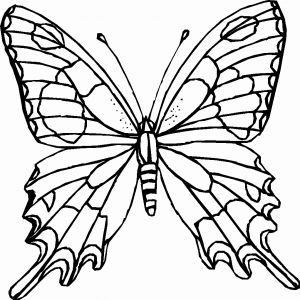 Coloring Pages butterfly - Printable Monarch butterfly Coloring Pages Best butterfly Drawing Color at Getdrawings 20l