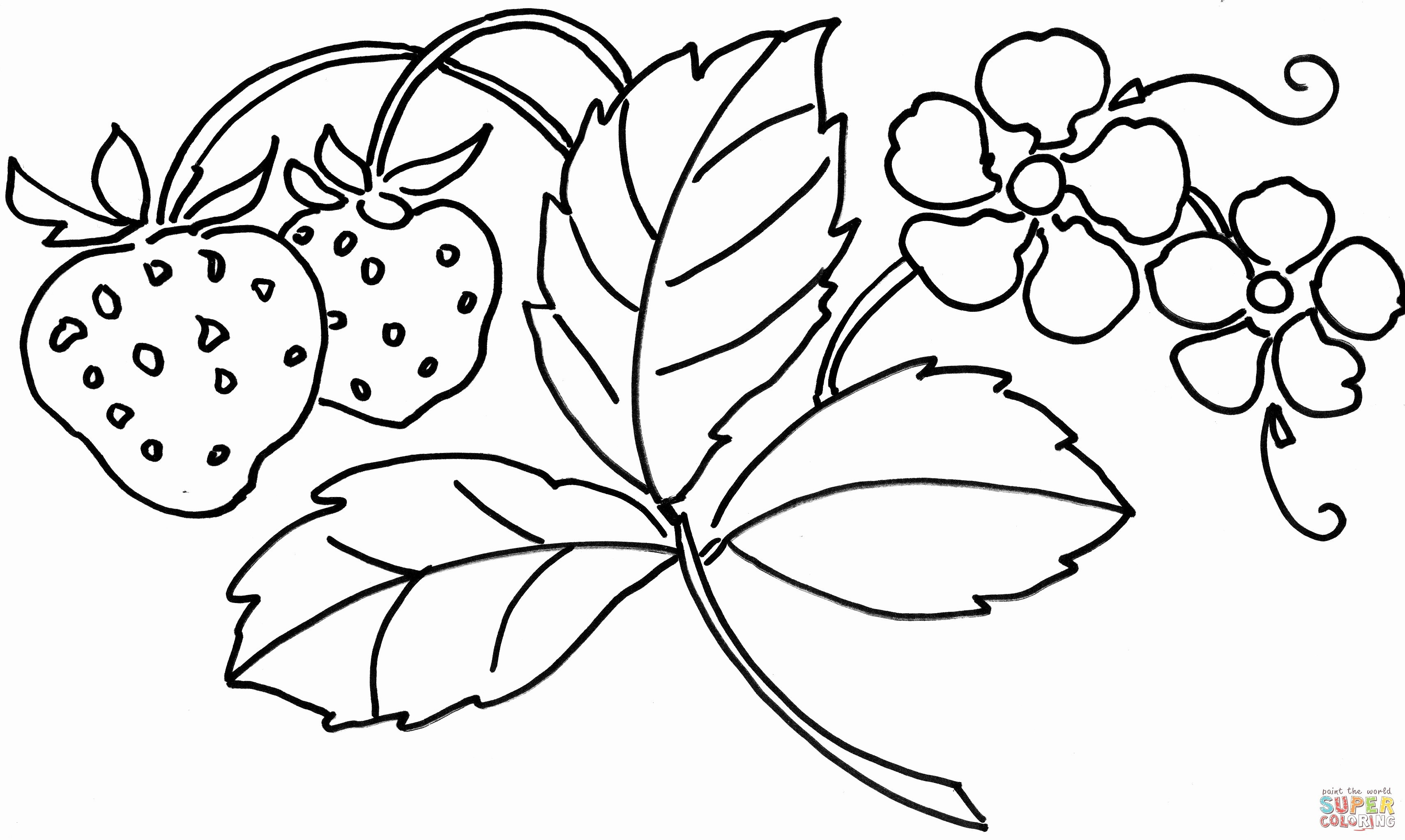 coloring pages hawaiian flowers Download-Hawaiian Flower Coloring Page Coloring Pages Hawaiian Flowers Amazing Awesome 40 Fresh Collection 15-d