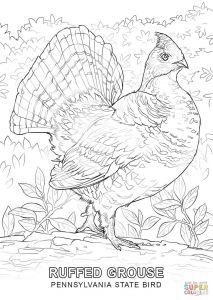 Coloring Pages Of Birds and Flowers - C4104bab2ad979f3d46cf974f61dec68 16b