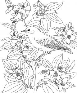 Coloring Pages Of Birds and Flowers - Free Printable Adult Coloring Pages Birds Flowers and 7 Jennymorgan Me Fine 1i