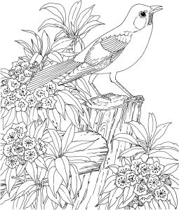 Coloring Pages Of Birds and Flowers - Free Printable Coloring Page Connecticut State Bird and Flower American Robin 1m