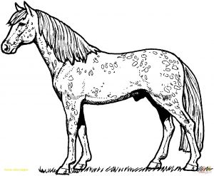 Coloring Pages Of Horses - Jockey Coloring Pages Great Printable Horse Coloring Pages Letramac 12o