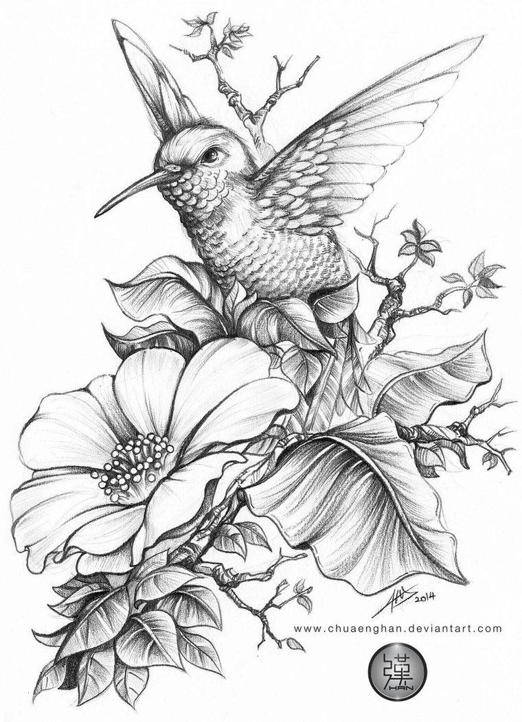 20 Coloring Pages Of Hummingbirds Collection - Coloring Sheets