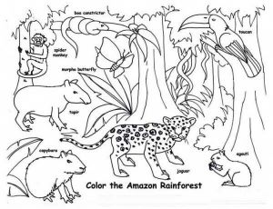 Coloring Pages Rain forest - Rainforest Animal Coloring Page Ac937ff40fcf Animals Pages 11j