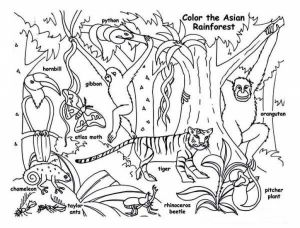 Coloring Pages Rain forest - Animals In the Rainforest Coloring Pages Shrewd Rainforest Colouring Sheets Miracle Coloring Pages to Print 15i