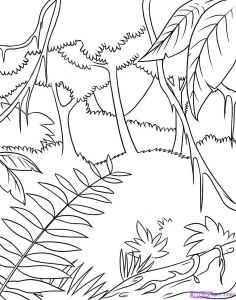 Coloring Pages Rain forest - Safari Coloring Pages How to Draw A Rainforest Step 6 Good Coloring Beautiful Children Colouring 7t