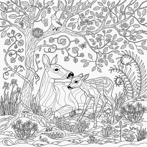 Coloring Pages Rain forest - Tropical Coloring Pages Fresh Rainforest Coloring Sheet Collection 3q