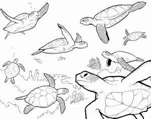 Complicated Animal Coloring Pages - Childrens Coloring Pages Animals Printable Coloring Pages Sea Animals Childrens Printable Coloring 14t