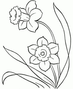 Daffodils Coloring Pages - Line Drawings Of Snowdrops Google Search 15l