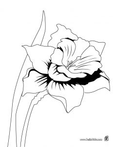 Daffodils Coloring Pages - Detailed Coloring Pages for Adults 10e