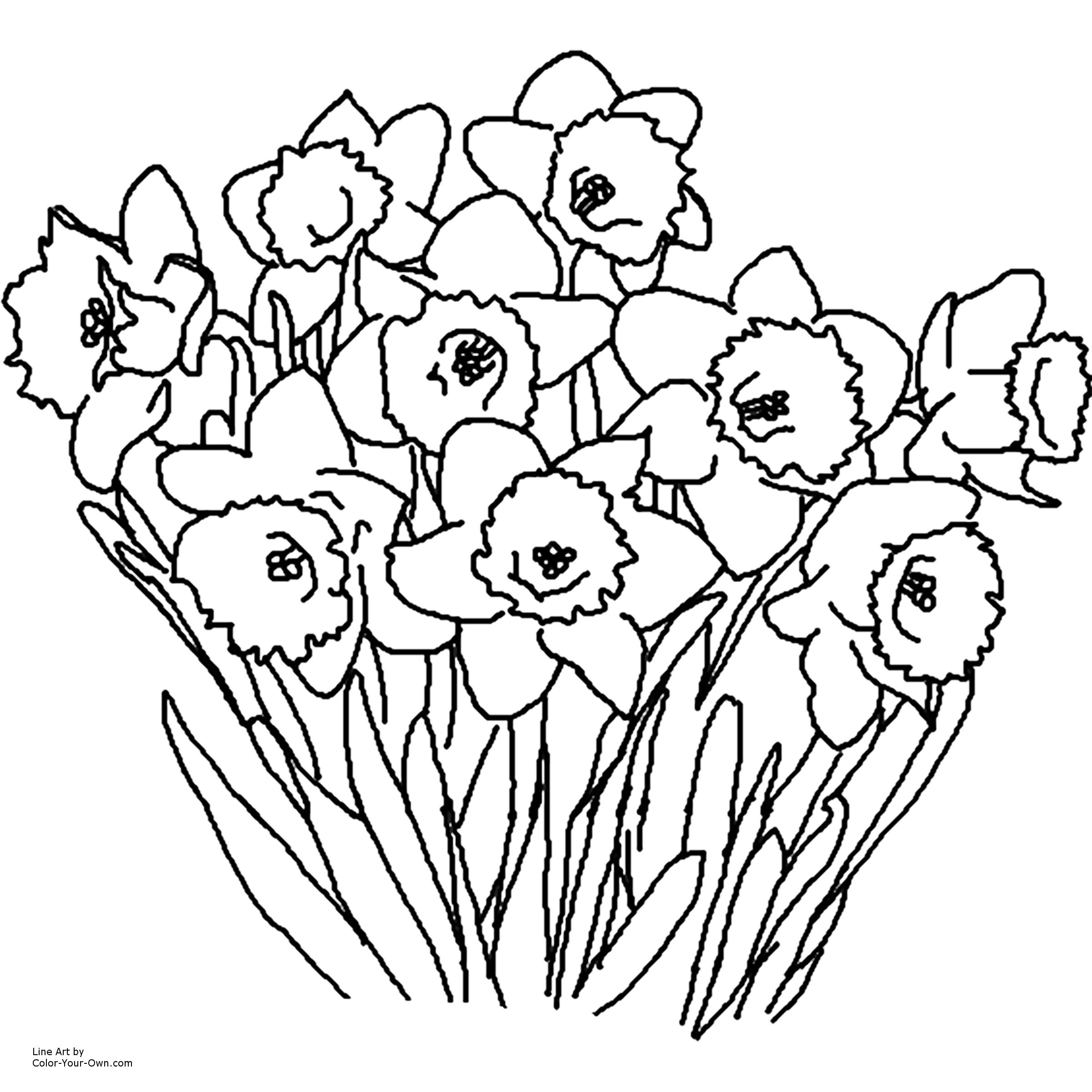 daffodils coloring pages Download-Printable Coloring Pages Flowers Daffodil Spring Flower Coloring Page Collection 7-p