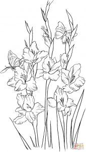 Donkey Ollie Coloring Pages - Gladiolus 2 Coloring Page 20e