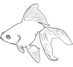 Fish Coloring Pages Pdf - the Rainbow Fish Coloring Page Puffer Fish Coloring Page New Awesome Rainbow Fish Coloring Page 2i