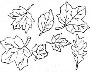 Free Printable Leaf Coloring Pages - Maple Leaf Pattern Free Printable Fall Leaves Coloring Pages Cool Coloring Pages 20c