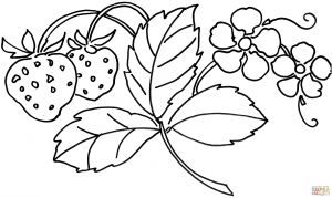 Free Printable Strawberry Coloring Pages - Easter Coloring Pages Free Printable Strawberry Flower Coloring Page Free Printable Coloring Pages 10a