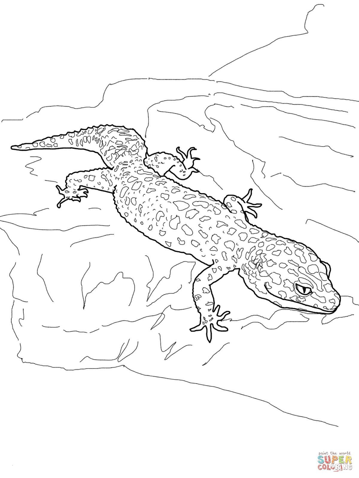 gecko coloring pages Collection-New Gecko Coloring Page Coloring Pages Neu Camelion Ausmalbilder 10-e