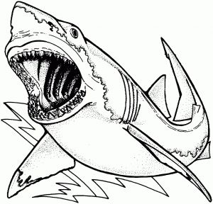 Great White Shark Coloring Pages - Shark Coloring Pages Printable Great White Shark Coloring Pages Awesome Bull Shark Drawing at 14h