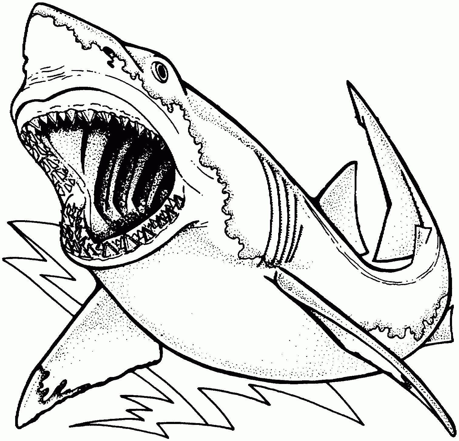 great white shark coloring pages Collection-Shark Coloring Pages Printable Great White Shark Coloring Pages Awesome Bull Shark Drawing at 6-g