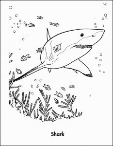 Great White Shark Coloring Pages - Shark to Print Beautiful Sharks Coloring Pages Free Printable New Reading Coloring Pages Best 7c