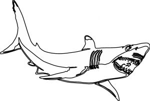 Great White Shark Coloring Pages - Shark Coloring Pages Printable Free Shark Coloring Pages 8t