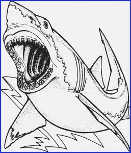 Great White Shark Coloring Pages - Shark Coloring Pages Shark Coloring Pages Beautiful 49 Fresh Pics Great White Shark 17n
