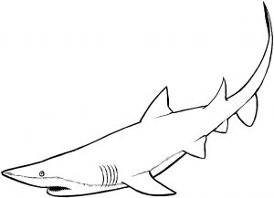 Great White Shark Coloring Pages - Free Printable Shark Coloring Pages Best Free Printable Great White Shark Coloring Pages Beautiful Fall 17c