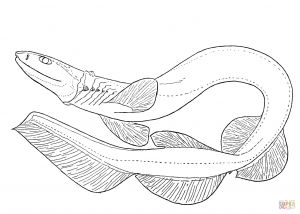 Great White Shark Coloring Pages - Frilled Shark Coloring Page 10g