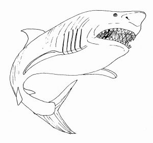 Great White Shark Coloring Pages - Educations Thanksgiving Shark Coloring Pages 23 Whale Page Unique Color Printable 14a