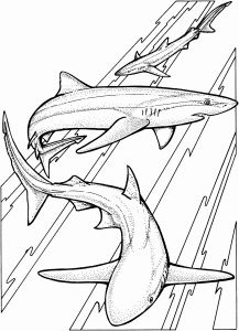 Great White Shark Coloring Pages - Great White Shark Coloring Beautiful Shark Coloring Pages Coloring Pages 16q