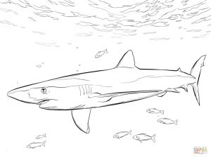 Great White Shark Coloring Pages - Blue Shark with Pilot Fishes Coloring Page From Blue Sharks Category Best Malvorlagen Hahn 6e
