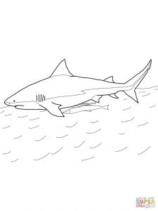 Great White Shark Coloring Pages - Shark Coloring Pages Sharks Coloring Pages Free Coloring Pages 18e