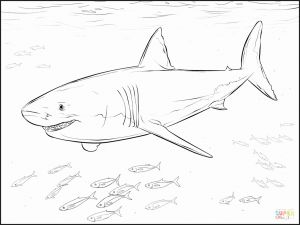 Great White Shark Coloring Pages - Great White Shark Coloring Pages to and Print for Free Shark Colouring Pages to Print New 6f