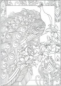Humming Belles Coloring Pages - Peacock Coloring Page 29 31 7p