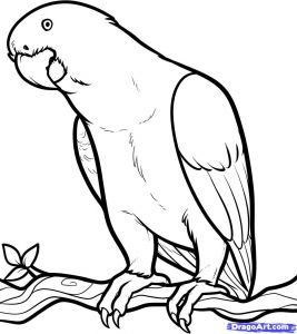Jamaica Coloring Pages - Free Coloring Page Of African Animals 13c