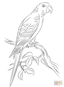 Jamaica Coloring Pages - Jamaican Red Macaw Coloring Page Free Printable Coloring Pages 18m