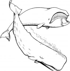 Jonah and the Whale Coloring Pages for Preschoolers - Whale Coloring Pages Great White Shark Coloring Pages Best Finding Nemo Shark Coloring 15t