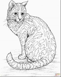 Kittens Coloring Pages - Coloring Pages Real Kittens Awesome Cute Cat Coloring Pages Inspirational Kitten Drawing at Getdrawings Gallery 17n