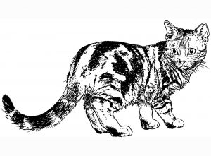 Kitty Cat Coloring Pages Printable - Coloring Cat 1900—1400 Coloring Pages to Print Adult 15l