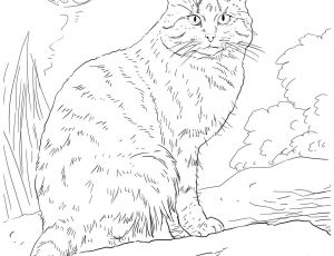 Kitty Cat Coloring Pages Printable - Printable Coloring Pages to Download for Free Kitty Cat Coloring Pages Fresh Cool Od Dog Coloring 2e