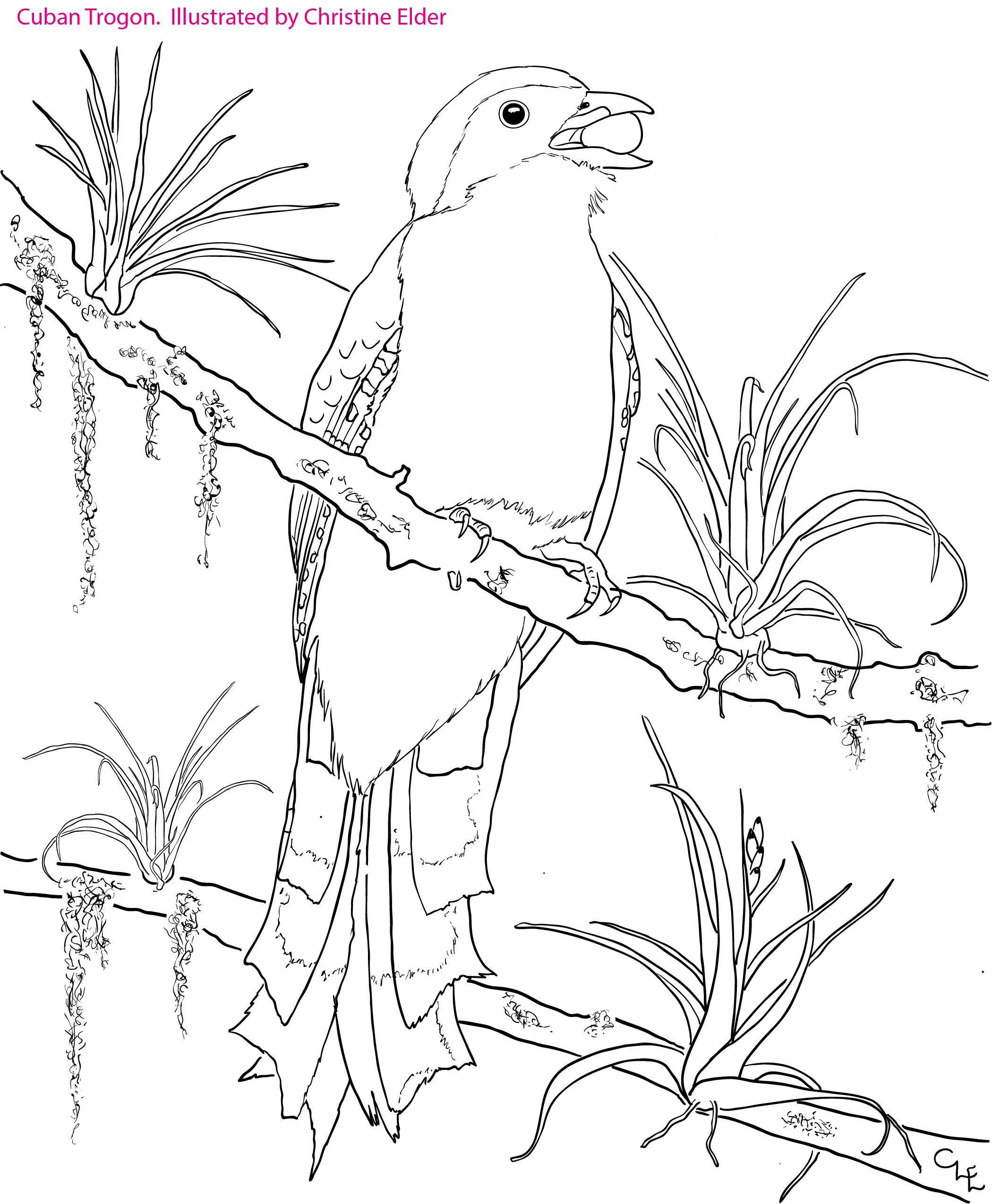 loon coloring pages Collection-Cuba Coloring Pages Cuba Coloring Pages 2-a